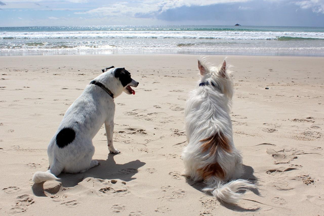 hondenvakantie zeeland